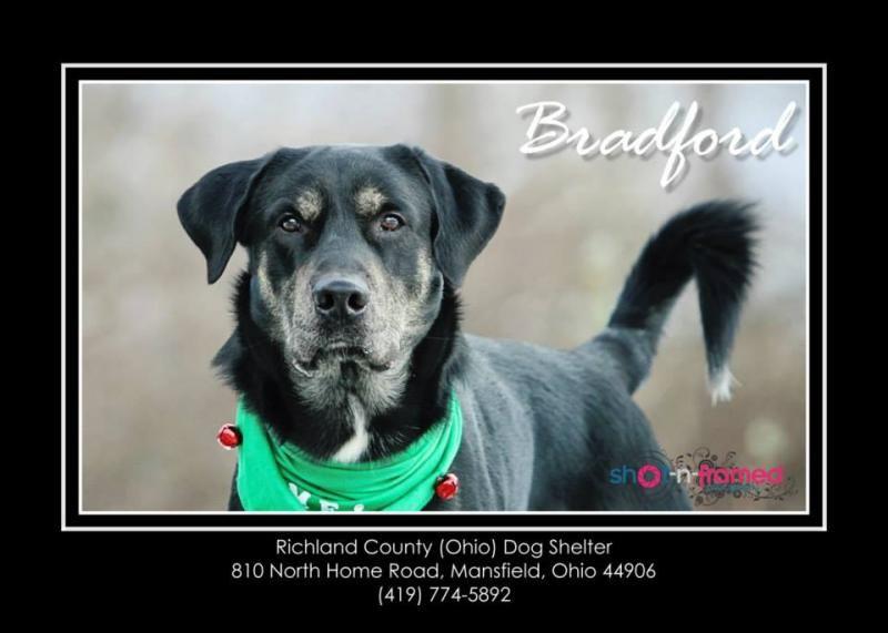 Adopt bradford urgent on with images my animal