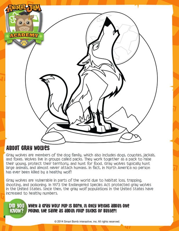 Grey Wolves Animal Jam Academy Desenhos Para Colorir Desenhos