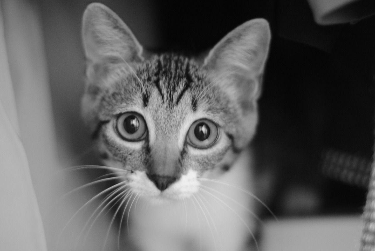 Meow City