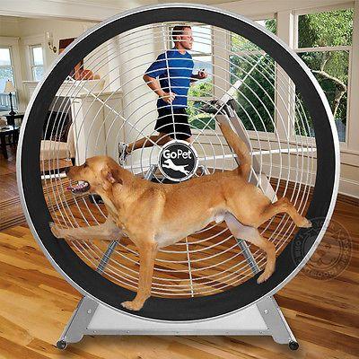 Gopet Treadwheel Dog Treadmill Medium Large Dogs 20 To 80 Lbs 60