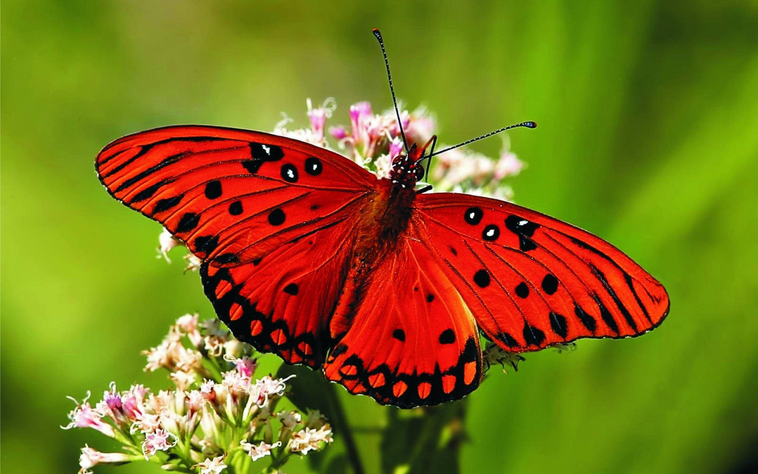 afficher limage source - Image De Papillon