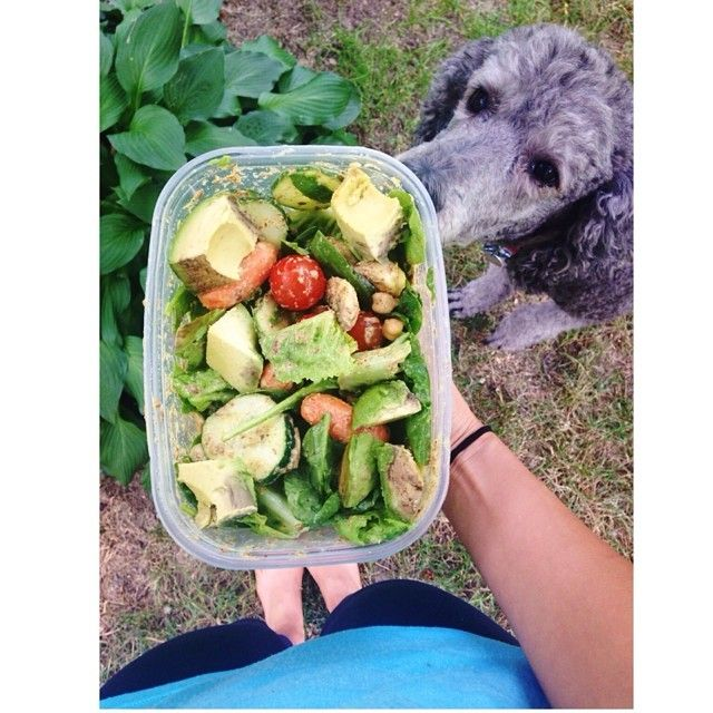 Quincy 🐩🐾 was so intrigued by my #sloppysalad that I had for lunch today. Tomatoes, cucumbers, carrots, chickpeas, avocado, and flax meal 😍. My dressing was inspired by @marisaaprice - just mustard, stevia, and water! And voila. 😁 #fitness #healthy #salad #iifym #fitfam aubernutter