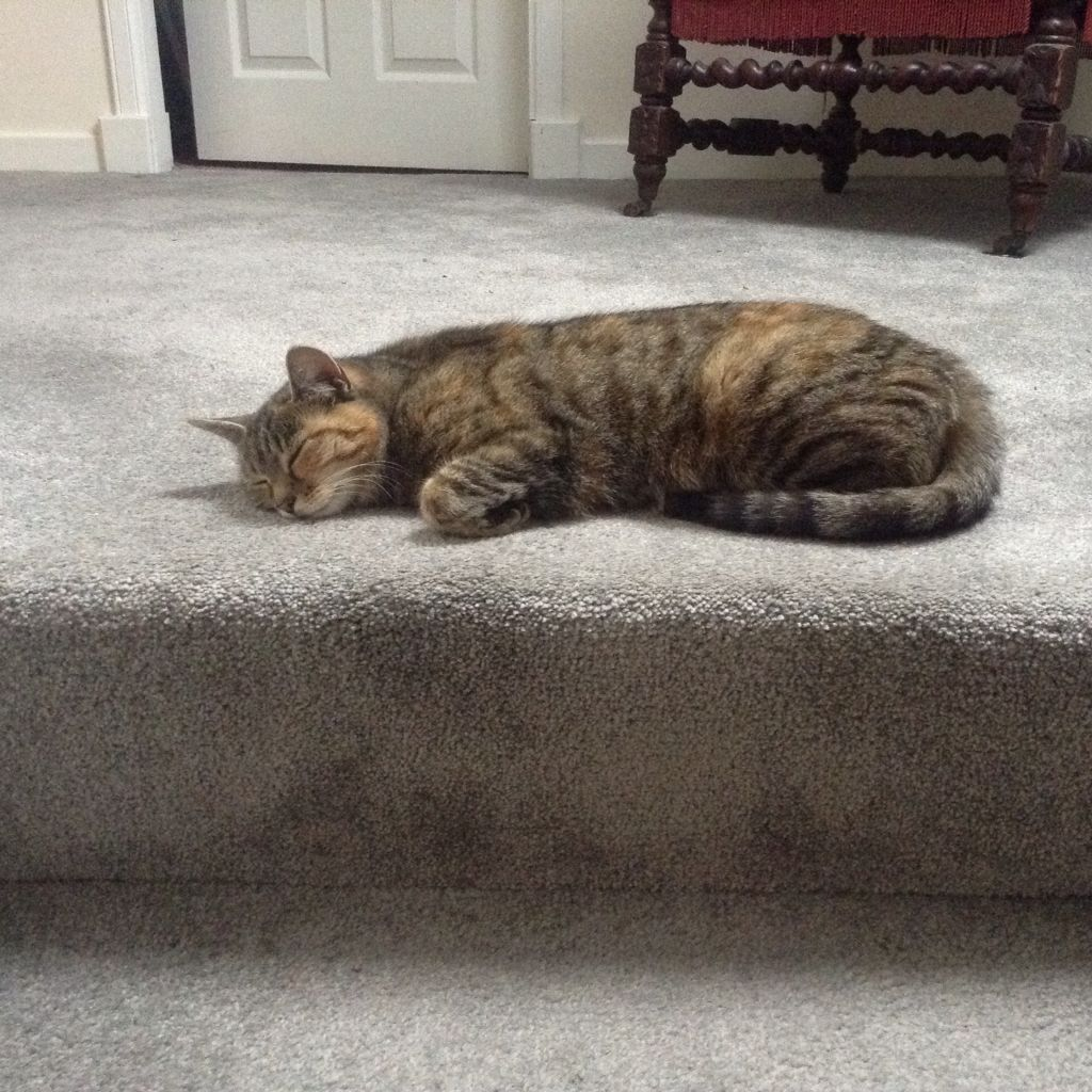 Tia trying to trip us up by snoozing at the top of the stairs!