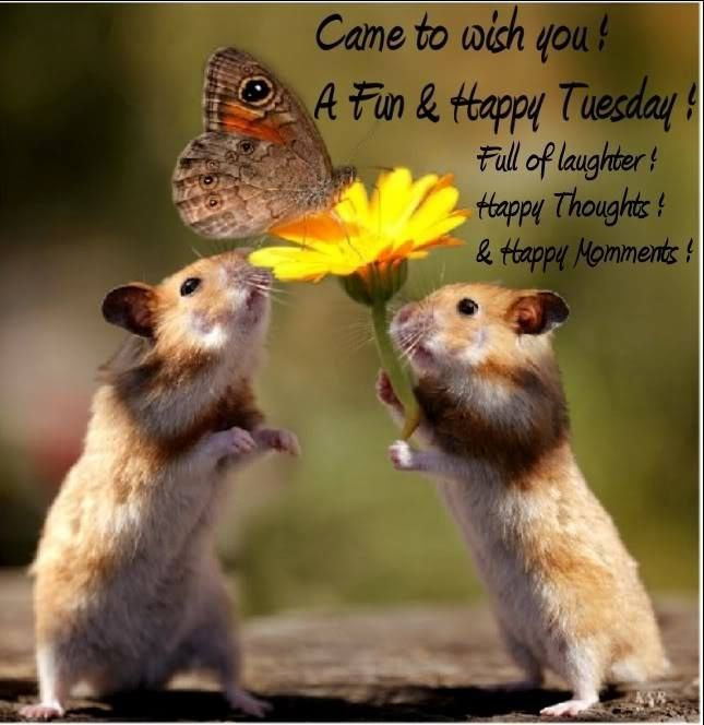 Happy Tuesday quotes cute animals...:) | Tuesday Quotes ...