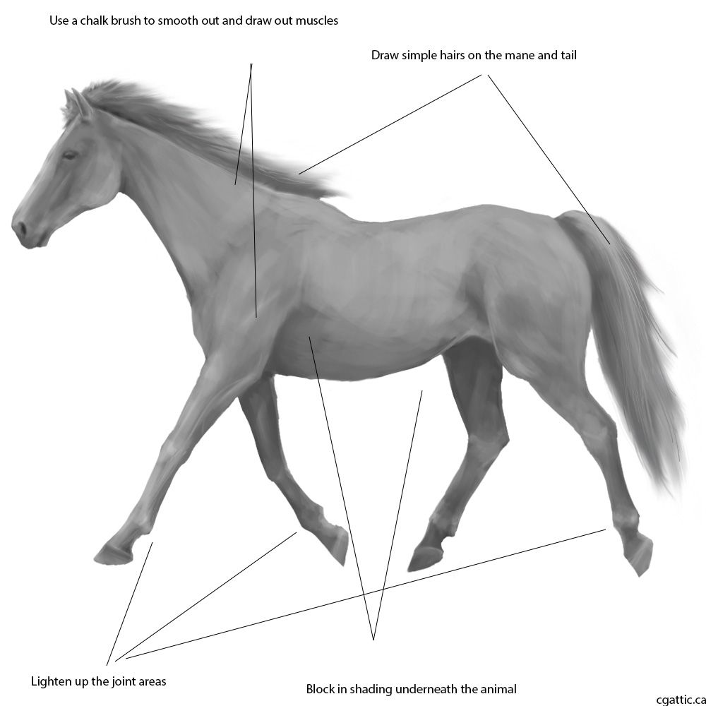 Realistic Horse Drawing in 4 Steps With Photoshop in 2019 ...