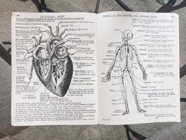 Pin de Mayara dos Santos en Estudos de Anatomia   Pinterest ...