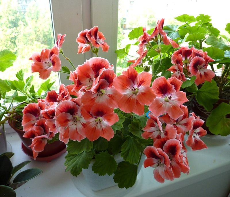 Комнатные цветы поглощающие негативную энергию