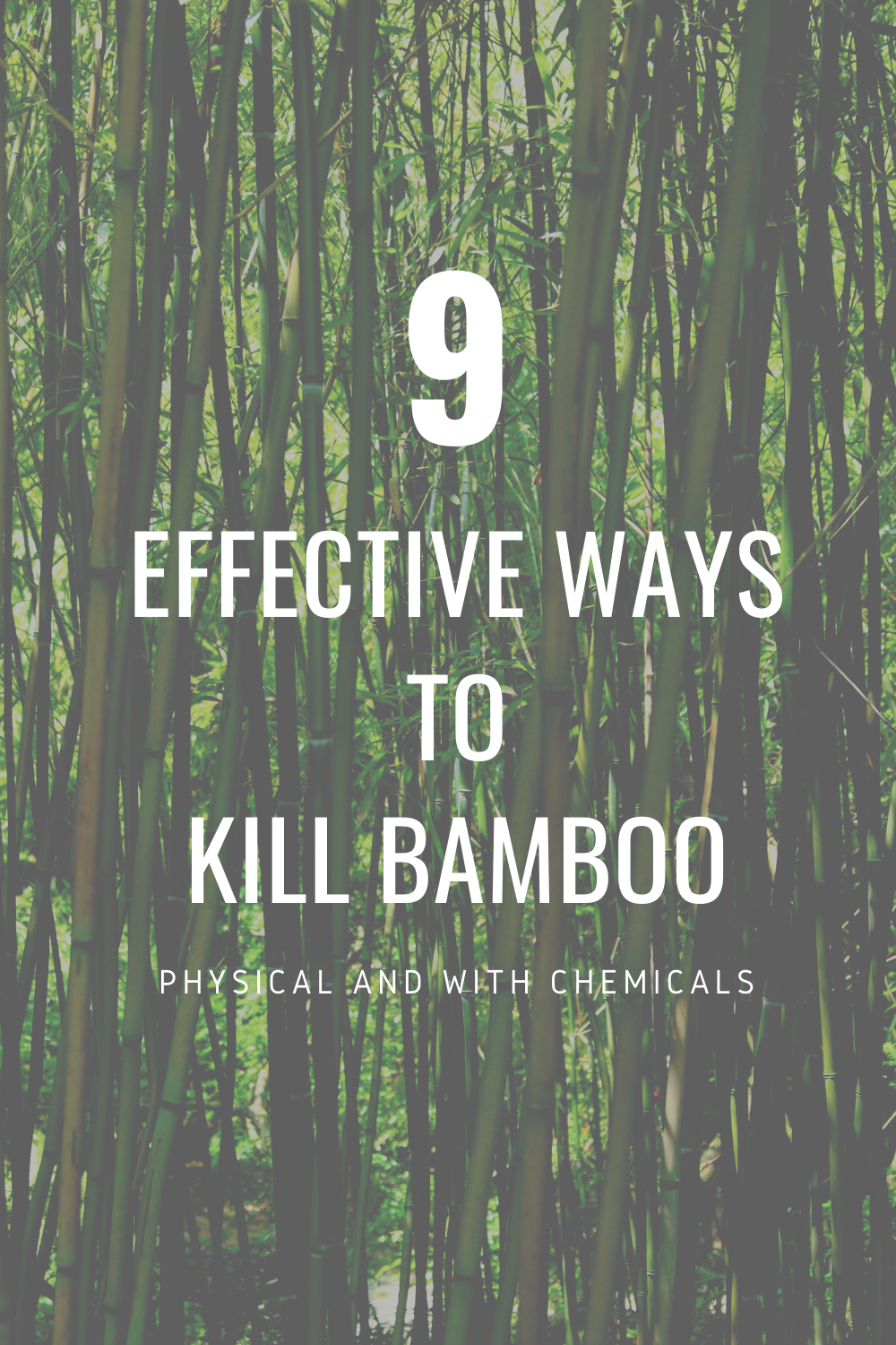 How to get rid of bamboo in 2020 | Bamboo landscape ...