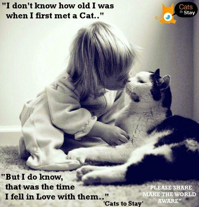 Il primo amore non si scorda mai | #VitaDaGatto #firstlove #catslover