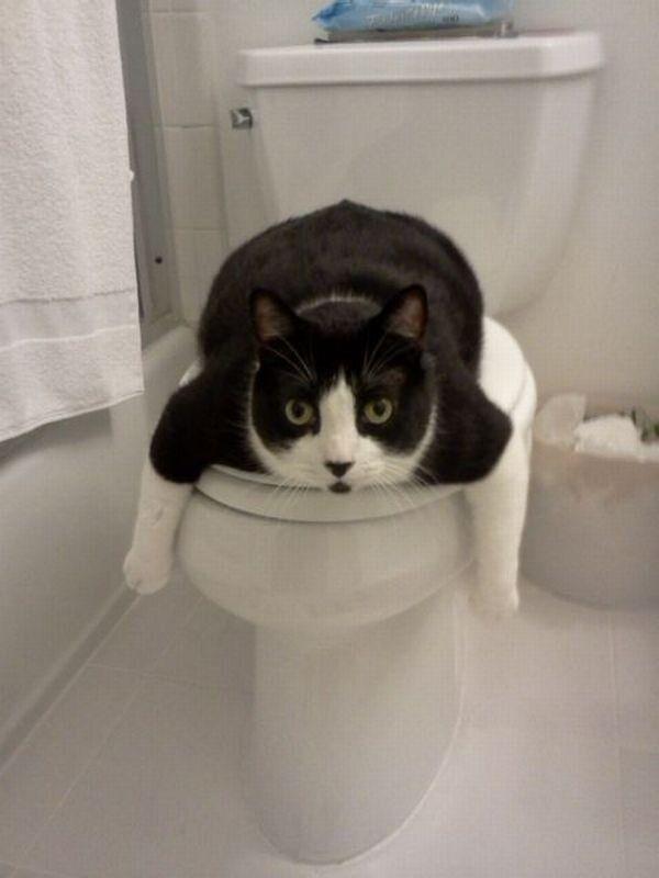 Daily Picdump 546 Lustige Katzenbilder Lustige Bilder Von Tieren Seltsame Katzen