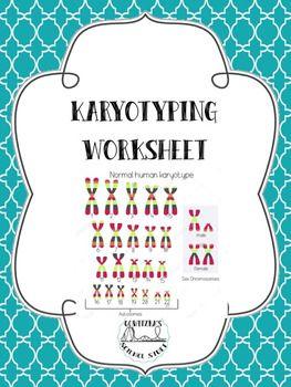 Karyotyping Worksheet Worksheets Science Teacher Pay Teachers