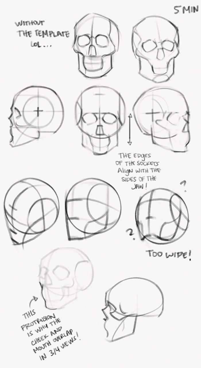 Drawing Dibujo De Calavera Arte De Anatomia Humana Dibujos Con Figuras