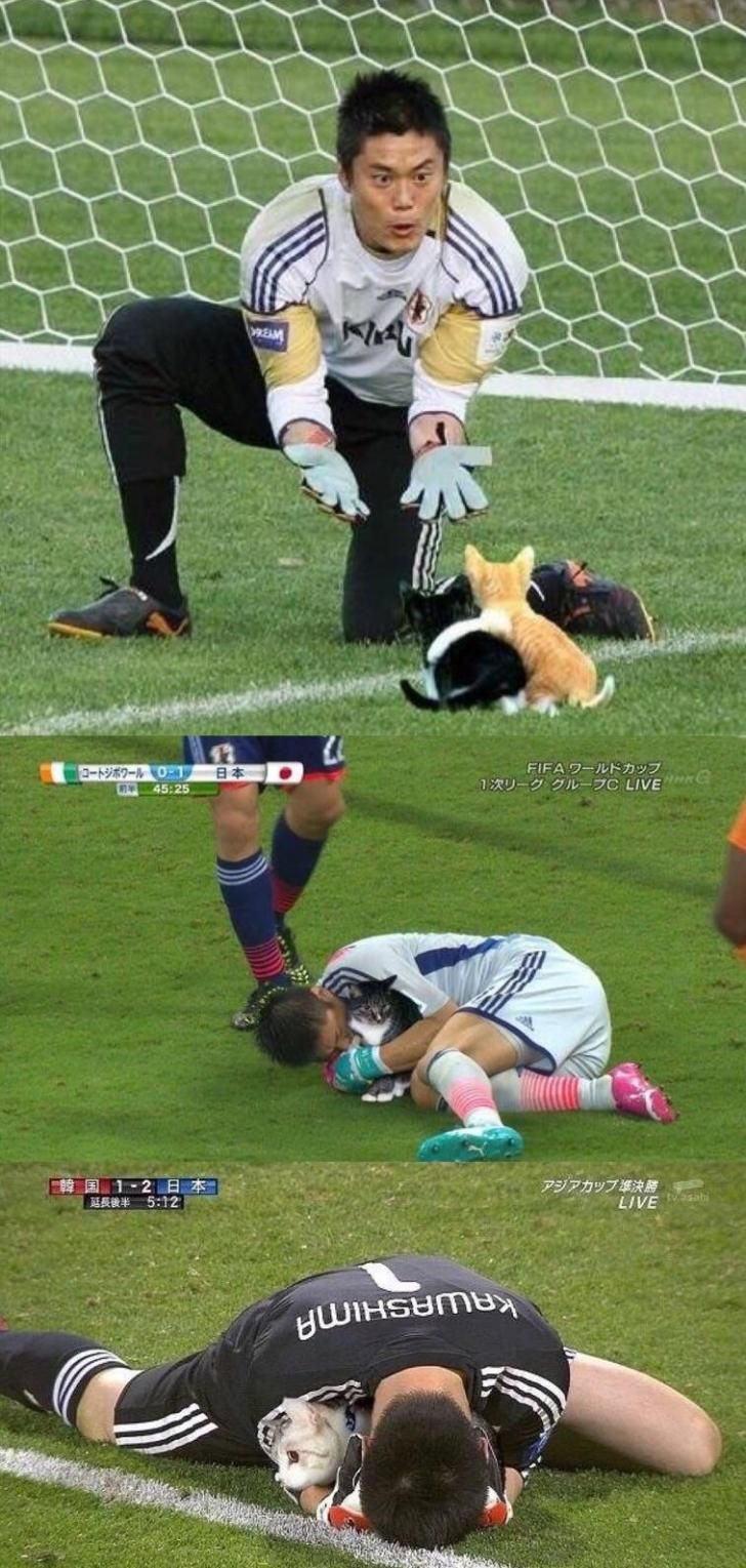 Soccer Balls Replaced With Cats Soccer Jokes Funny Cute Soccer