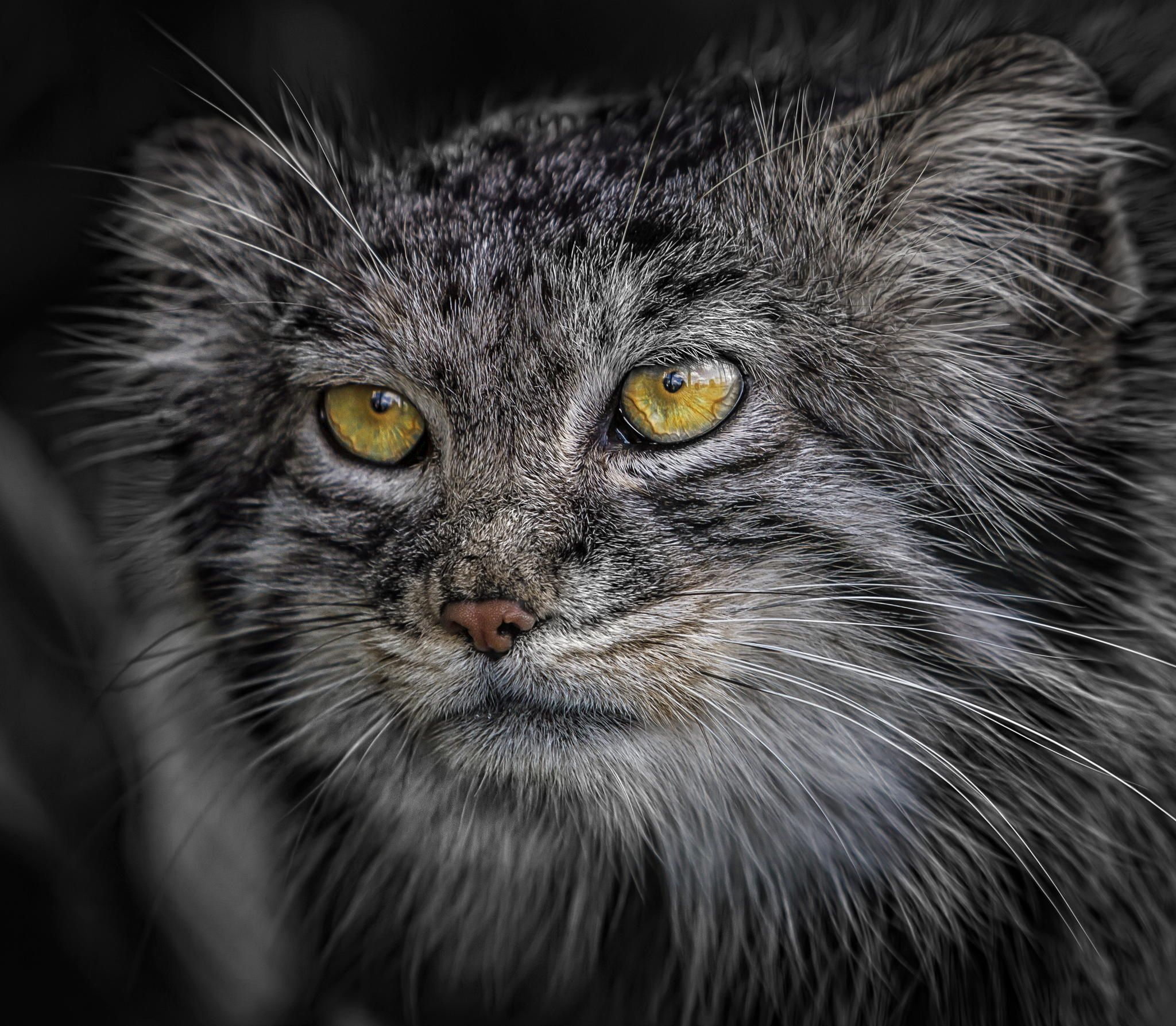 Photograph Those Eyes by Paul Keates    on 500px