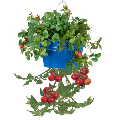 Houston International Galvanized Steel Hanging Planter | Wayfair