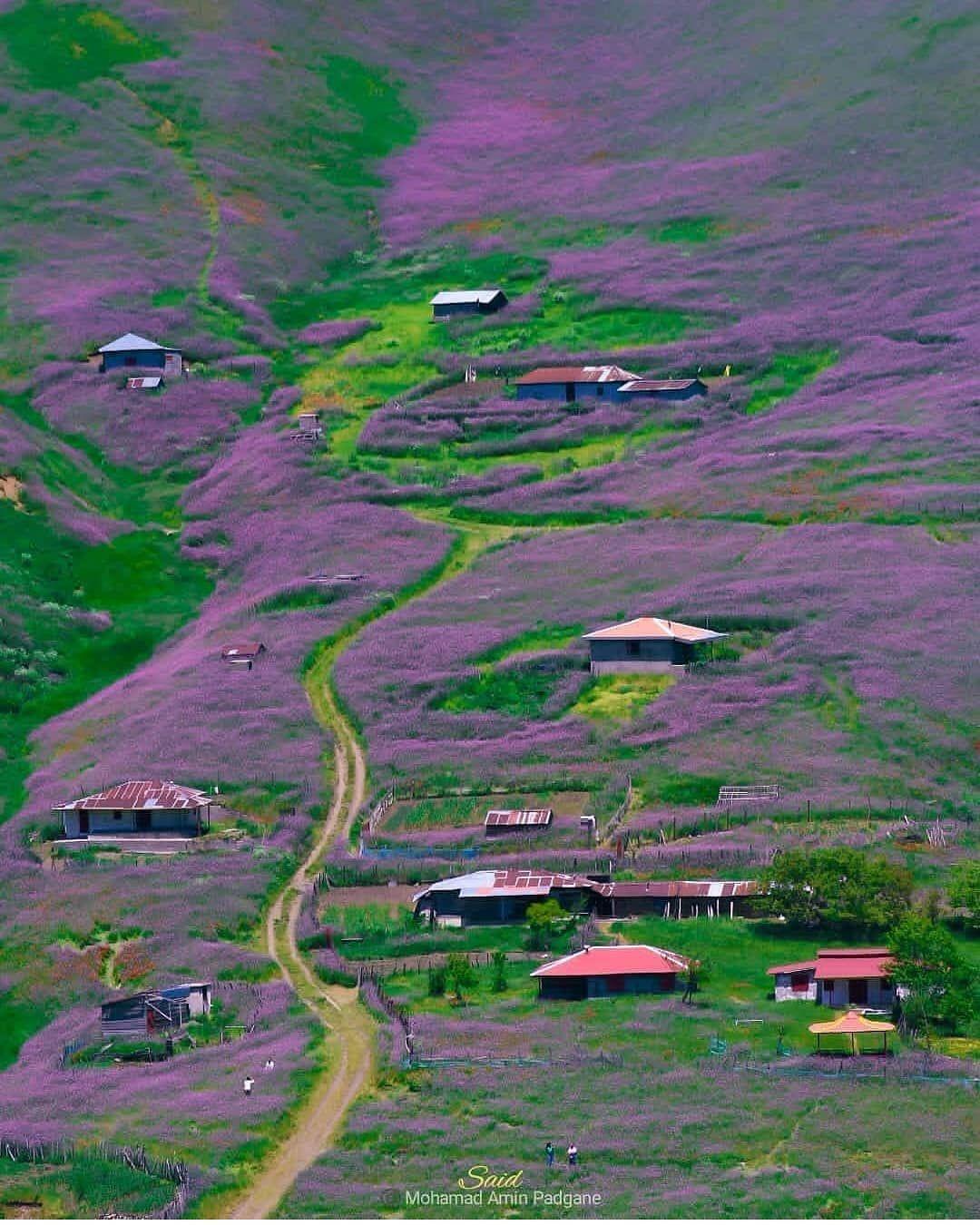 La Vue Des Fleurs Sauvages😍😍 à Gilan, Au Nord D'Iran