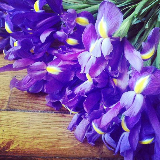 purple irises bouquet. #flower #valentine #day | favorite flowers, Ideas