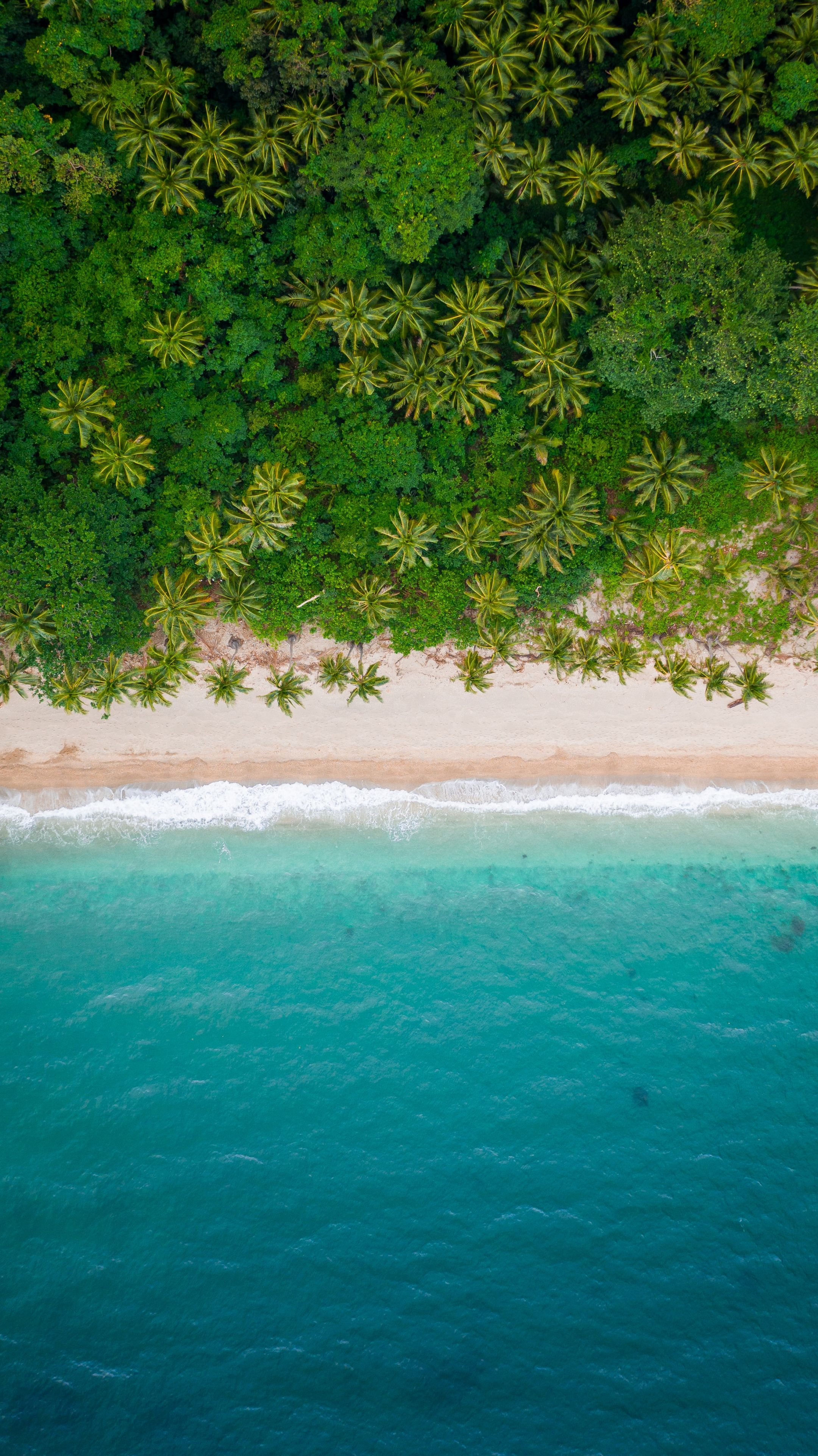 Download Beach Clam And Adorable Aerial View Beautiful Wallpaper For Screen 2160x3840 4k Sony Xperia Z5 Ocean Wallpaper Beach Wallpaper Scenery Wallpaper Drone aerial shot trees beach coast