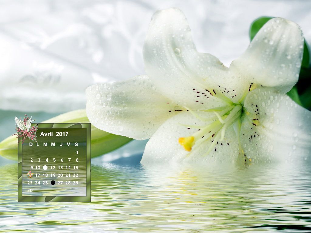 Un Lys Blanc Quelle Puret Cette Fleur Lys Blancs Fleur De Lys Lys