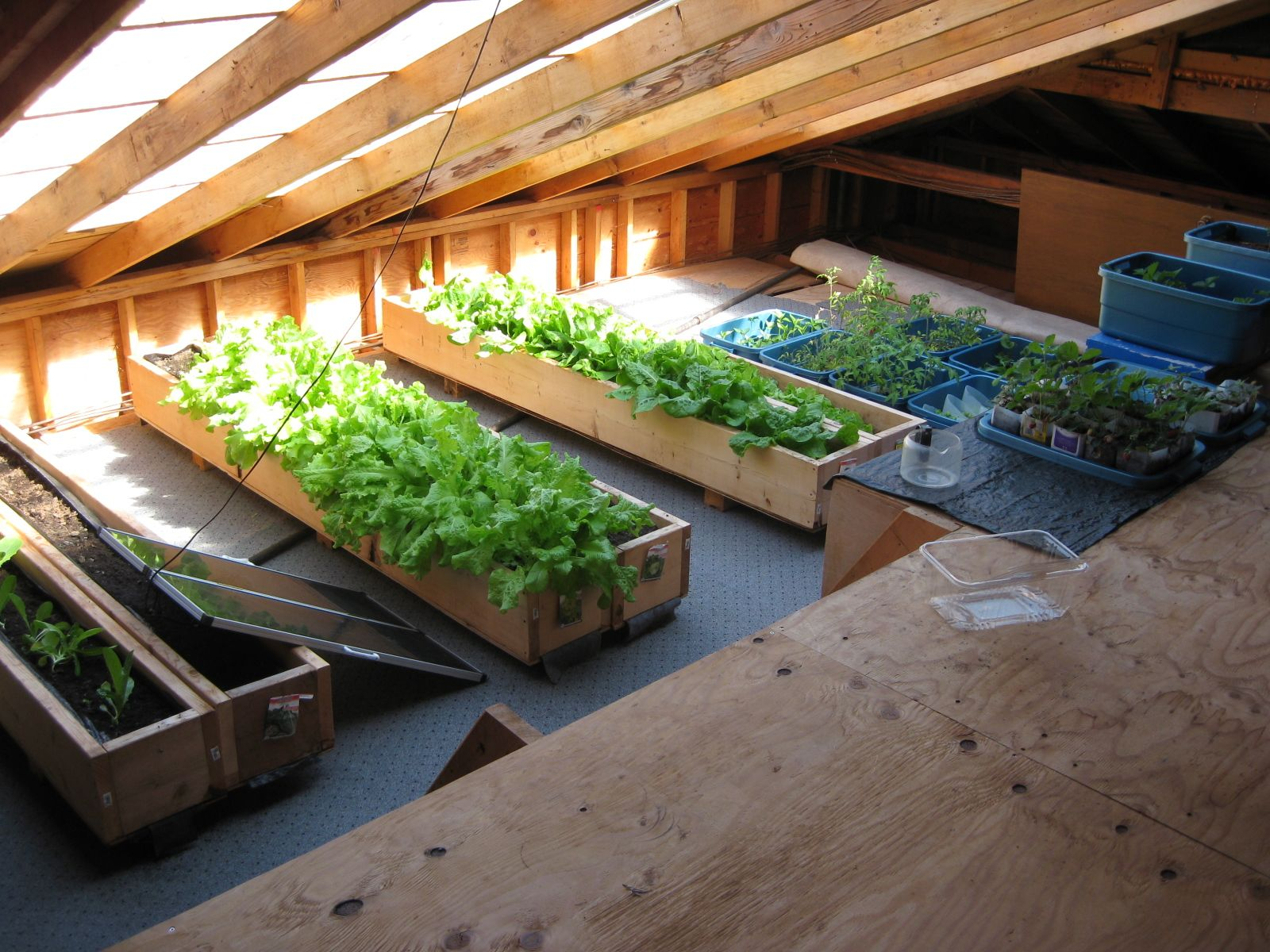 Build A Solar Attic For Heating Cooling And Growing Plants Growing Plants Plants Natural Building