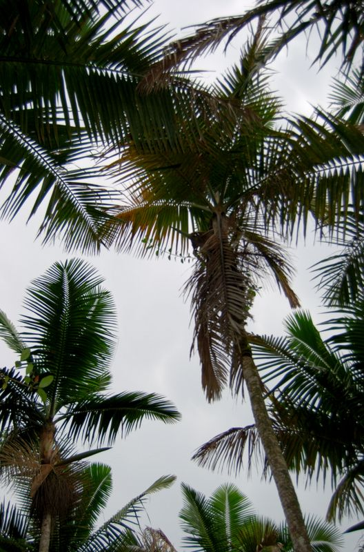 El Yunque National Forest, Puerto Rico   THE MOSAIC FINGERPRINT
