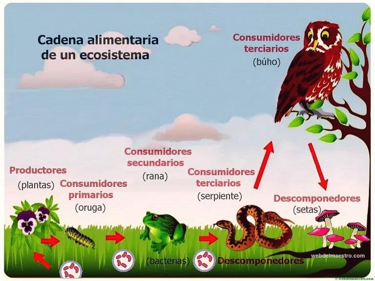 Ecosistema Cadena Alimenticia Web Del Maestro Ecosistemas Ciencias De La Escuela Intermedia Libros De Matematicas