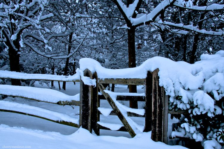 Back Garden Gate in the Snow
