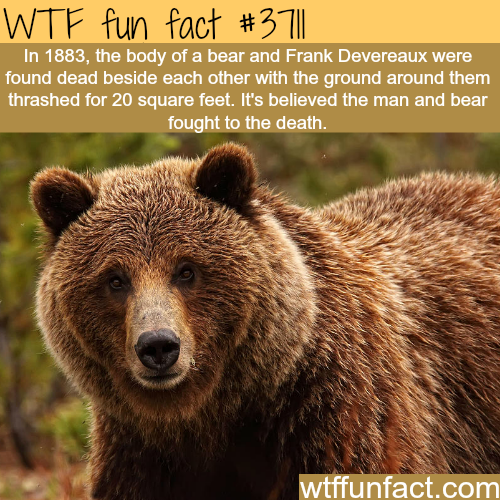 WTF Facts : funny, interesting & weird facts   Good To Know ...