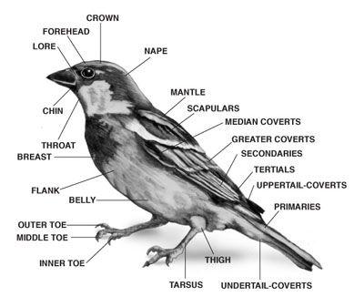bird anatomy | Birds in 2019