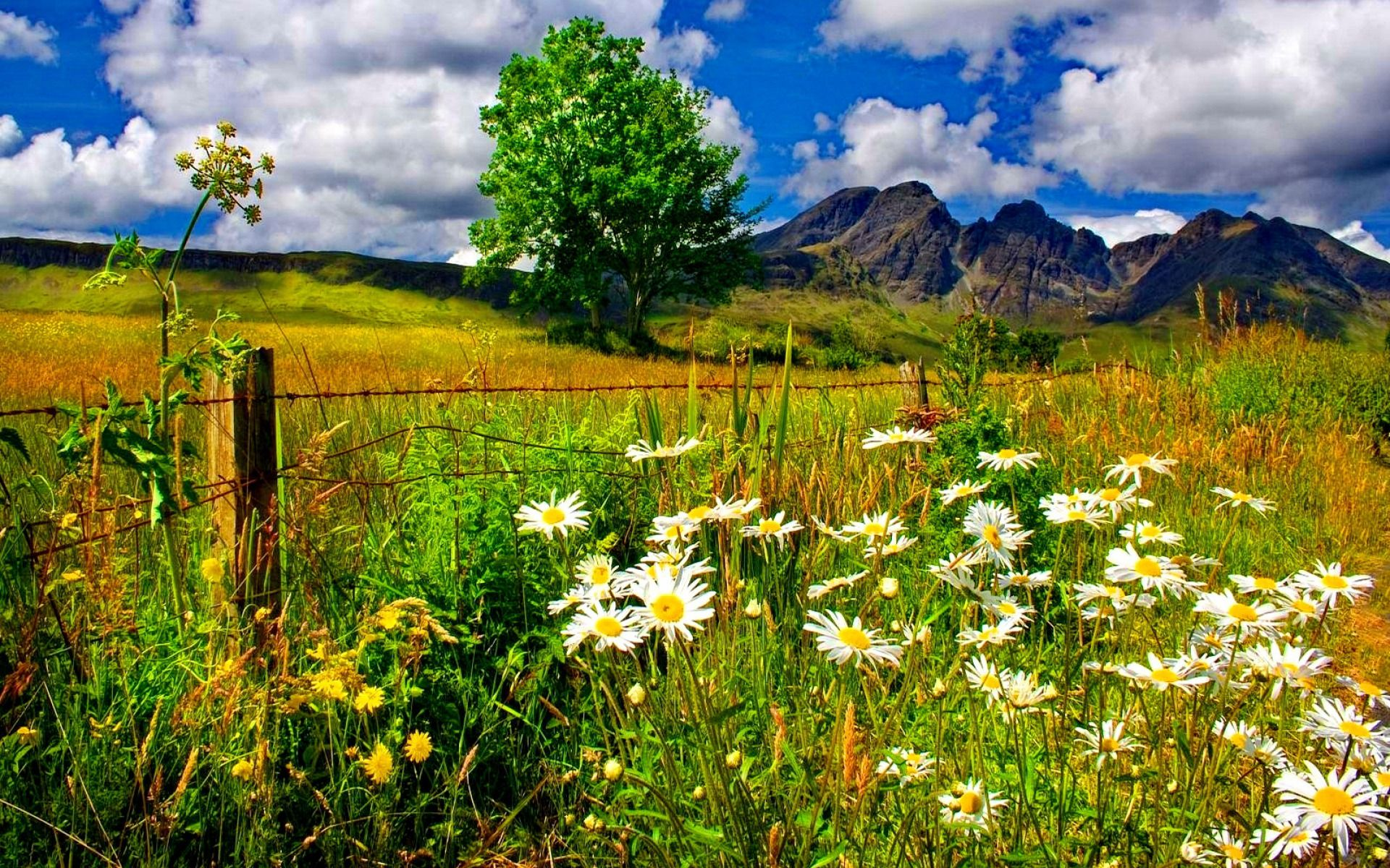 Daisies Growing In Mountain Field Computer Wallpapers Desktop Backgrounds 1920x1200 Id 686371 Spring Landscape Scenic Photos Photography Wallpaper