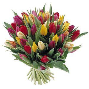 Fiori Di Tulipani Consegna Fiori A Domicilio Tulipani Tulipano Fiori
