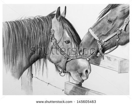 stock-photo-pencil-drawing-of-two-draft-horses-nuzzling-love-between-two-horses-nuzzle-each-other-as-they-meet-145605463.jpg (450×359)