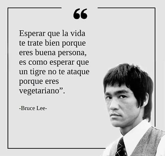 Frases Bruce Lee Frases Proverbios Frases Motivadoras Y