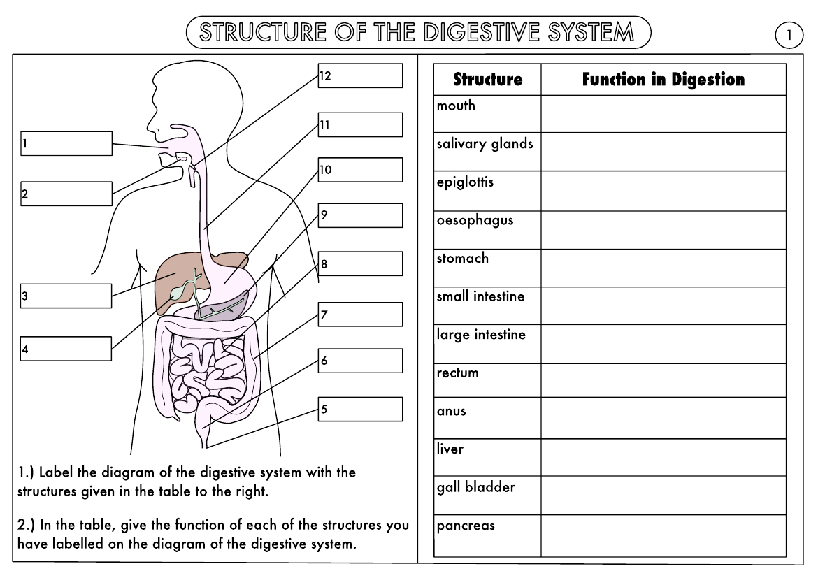 Science Worksheet Human Body Grade 5