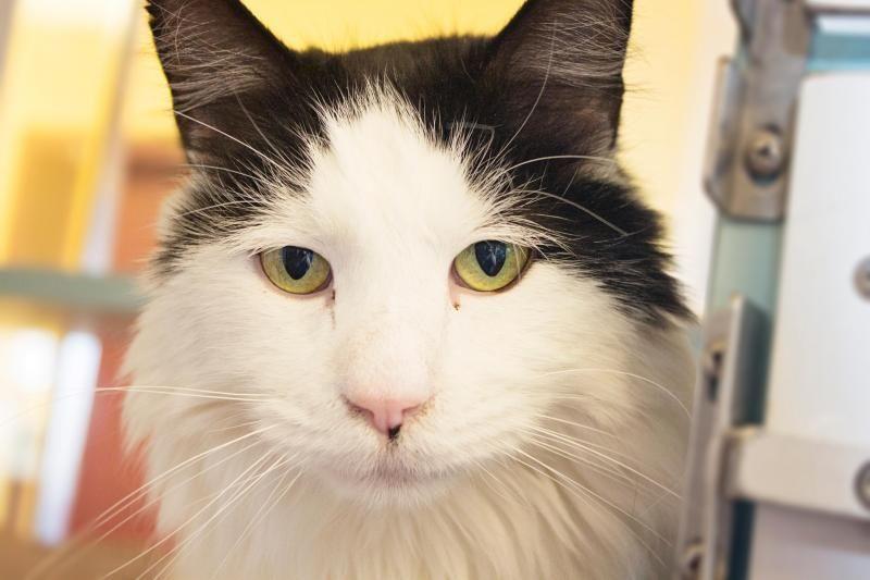 Adopt Sweetie Pie On Petfinder Cat Adoption Sweetie Pie Cats