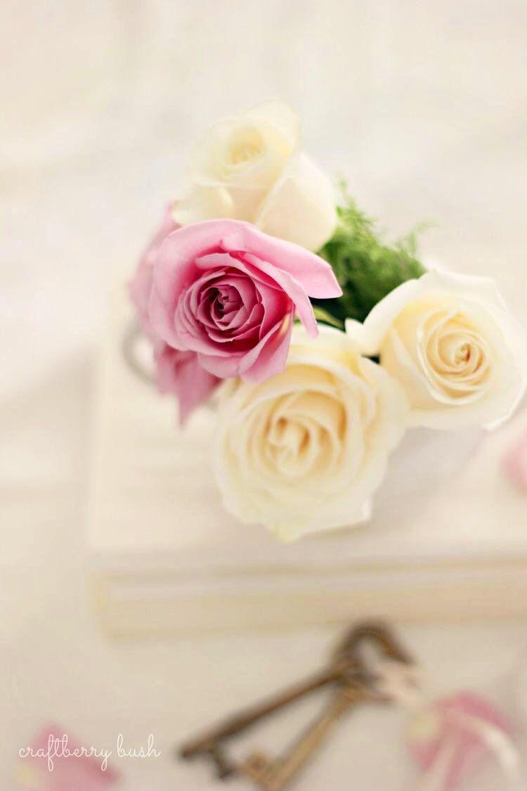 خاص بملحقات التصميم On Twitter In 2021 Rose Flowers Beautiful Roses