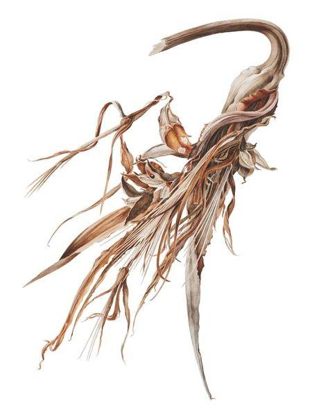 Rory McEwen watercolor - Поиск в Google