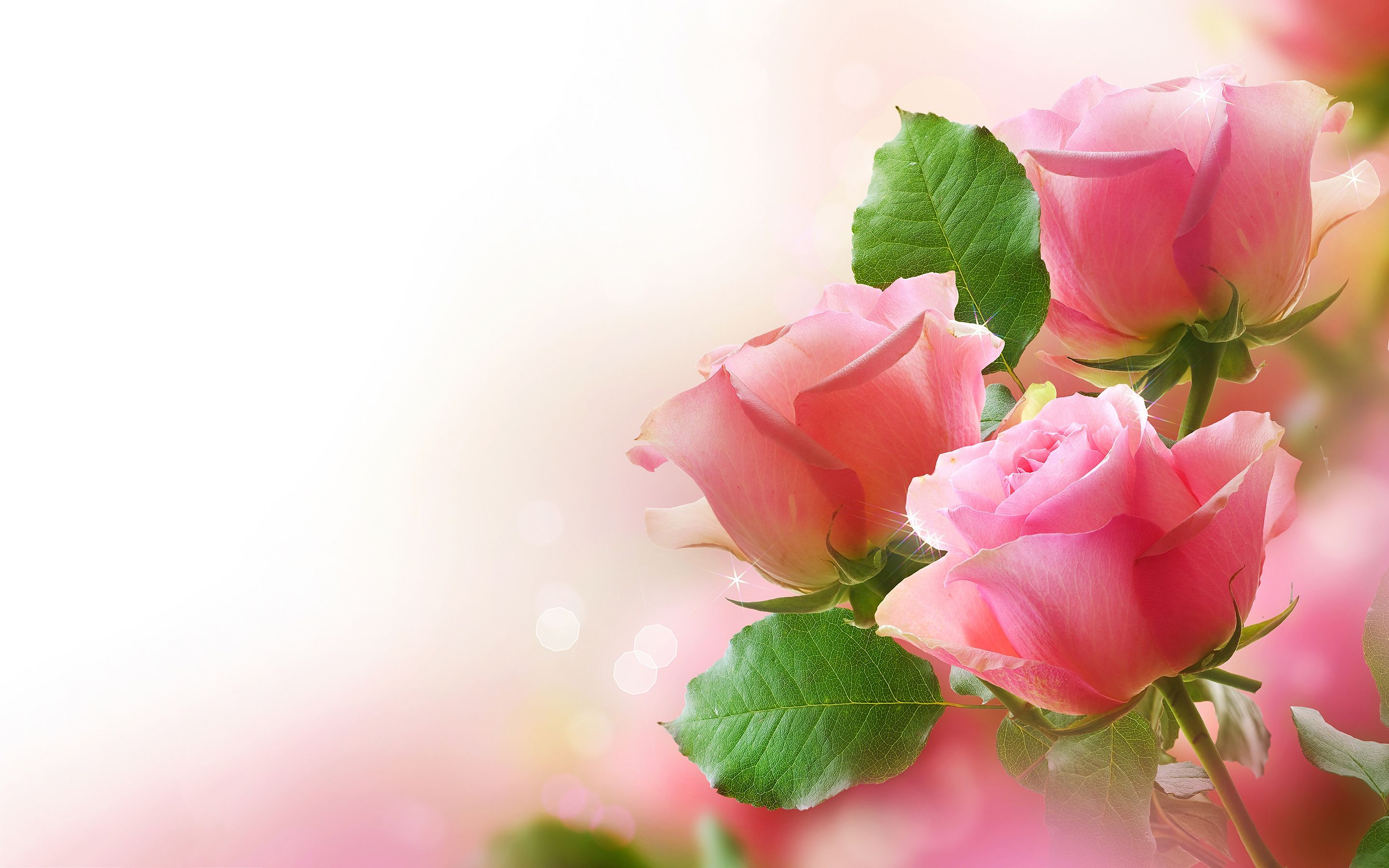 Pictures Of Flowers Roses And Wallpapers Download Roses
