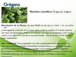 Resultado de imagen para imagenes de plantas medicinales y for Plantas de interior fotos y nombres