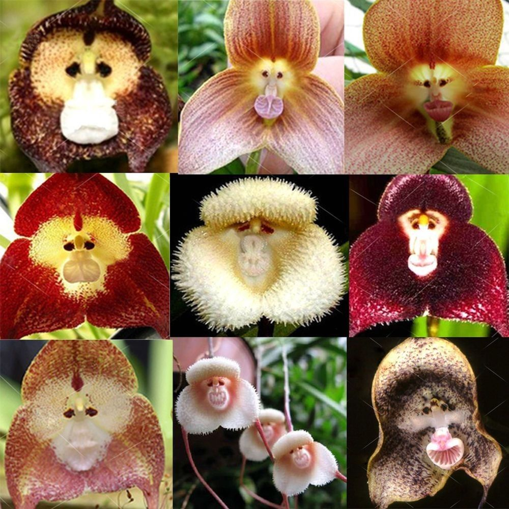 Pin by thinh on orchids pinterest orchids plants and orchid seeds