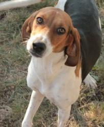 Adopt Sue Ellen On Treeing Walker Coonhound Dog Sounds Puppies