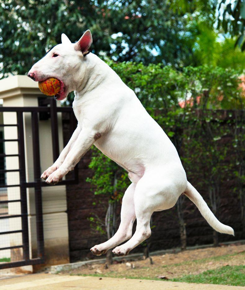 Good catch fella #bull #terrier