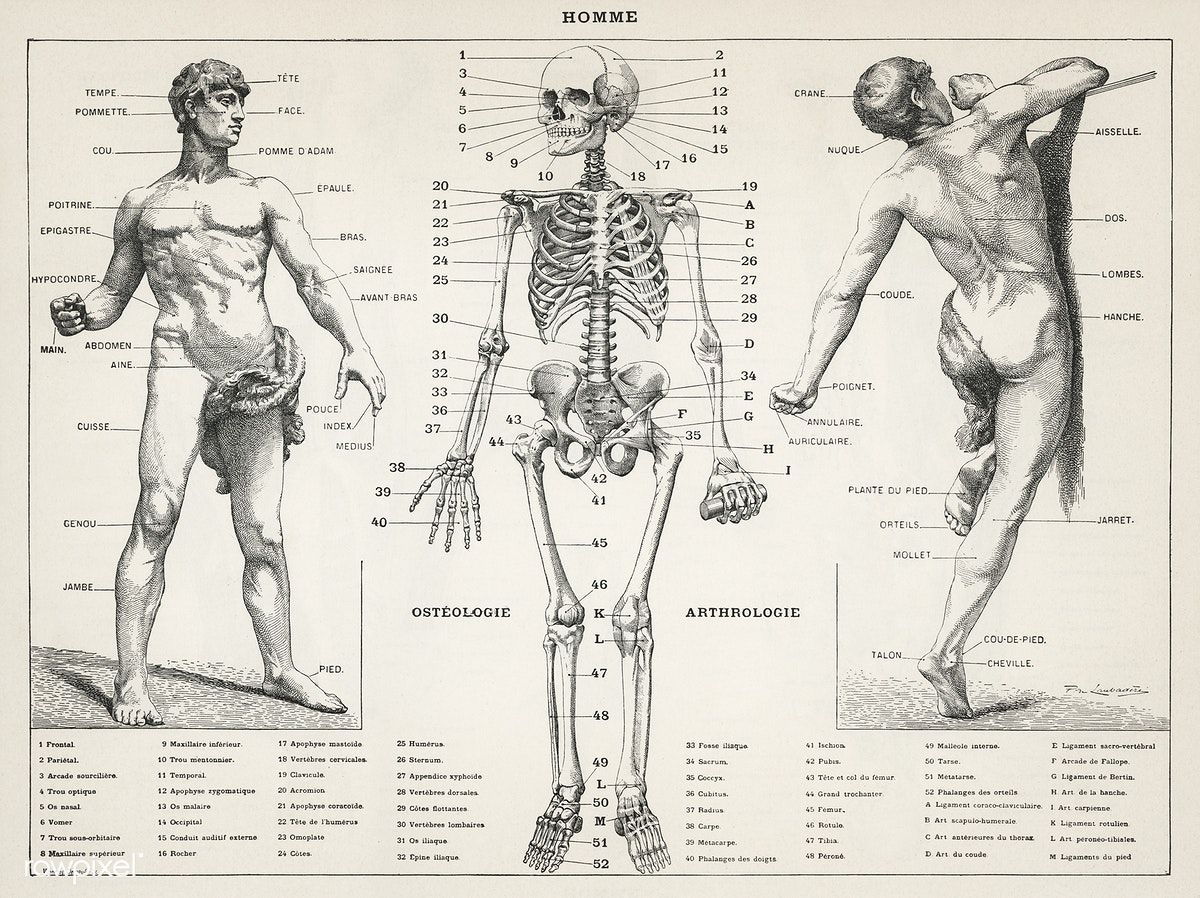 An antique illustration of the human body (1900) by Larousse, Pierre ...