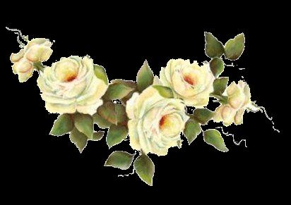 Rosa Blanca Floral Painting Rose Painting Flower Printable