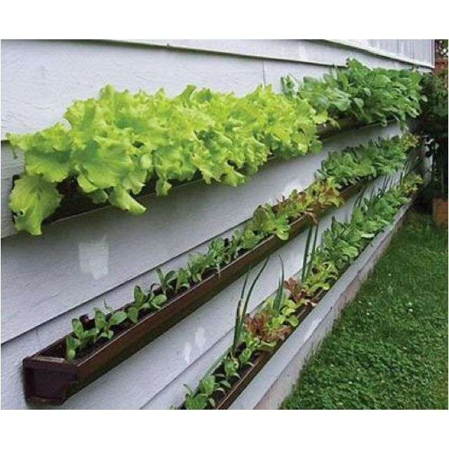 Create a window-box veggie patch using guttering.