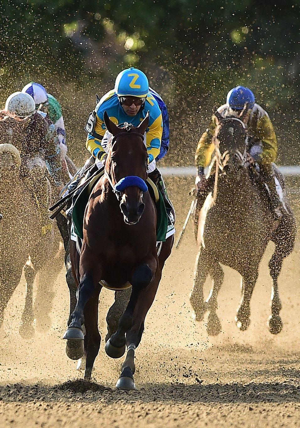 American Pharoah running in the Belmont Stakes horse race ...  American Pharoa...