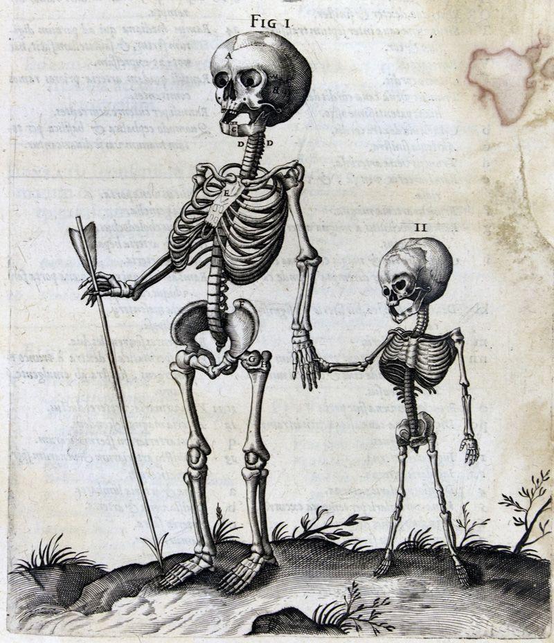 Old Book Illustration Of 2 Skeletons