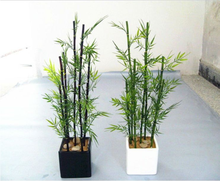 Decoracion de interiores con plantas ca as de bambu for Decorar piso zen