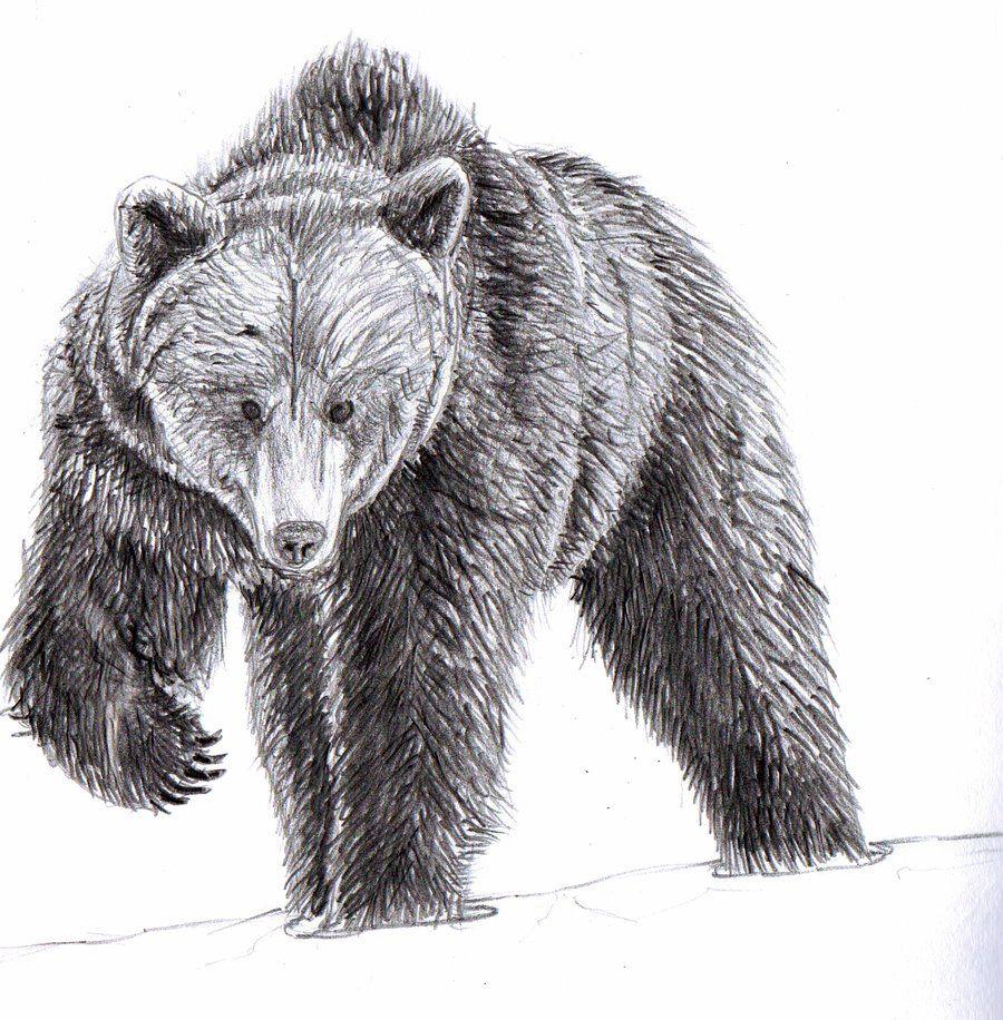 bear drawing Google Search Brown bear art, Bear sketch