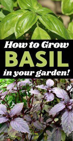 Photo of Mini Garden Ideas